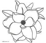 Magnolia Blossom clipart