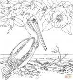 Pelican Island coloring