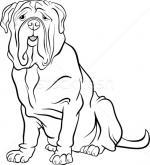 Mastiff coloring