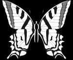 Monarch Butterfly svg