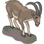 Mountain Goat clipart