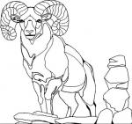 Mountain Goat coloring