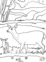 Mule coloring