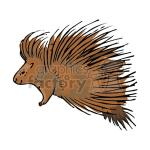 New World Porcupine clipart