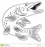 Northern Pike clipart