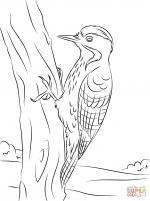 Woodpecker coloring