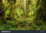 Olympic National Park clipart