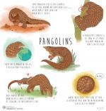 Pangolin svg