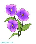 Pansy coloring