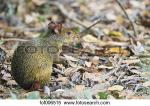 Pantanal clipart