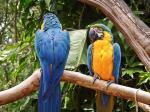 Pantanal coloring