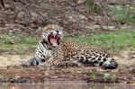 Pantanal svg