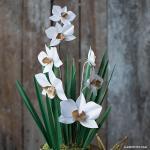 Paperwhite Narcissus svg