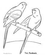 Parakeet coloring
