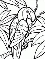 Rainforest coloring
