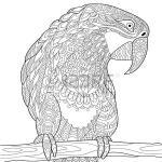 Parrotbill coloring