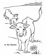 Pasture coloring
