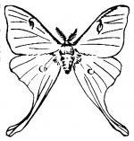 Squeaking Silk Moth clipart