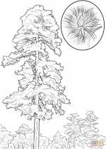 Pine Tree coloring