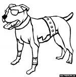 Pitbull coloring