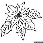 Poinsettia coloring