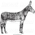 Poitou Donkey clipart