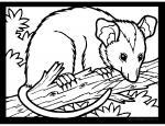 Possum coloring