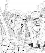 Primate coloring