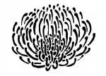 Protea svg
