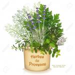 Provence clipart