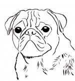 Pug coloring