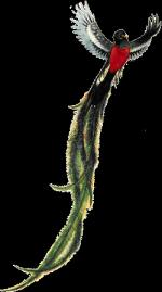 The Quetzal Of Guatamala coloring