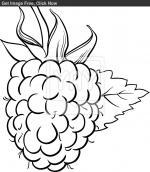 Raspberry coloring