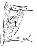 Rattlesnake coloring