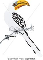 Red-billed Hornbill coloring