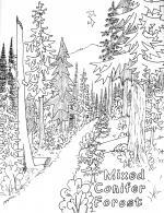 Redwood coloring