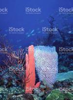 Reef svg