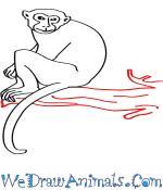 Rhesus Macaque coloring