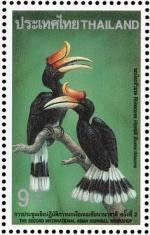 Rhinoceros Hornbill svg