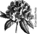 Rhododendron clipart