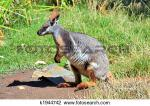 Rock Wallaby clipart