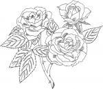 Rose Bush coloring