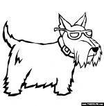 Scottish Terrier  coloring