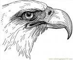 Sea Eagle coloring