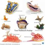 Sea Slug clipart