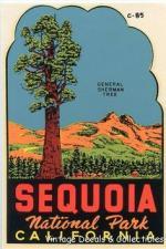 Sequoia National Park clipart