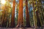 Sequoia National Park clipart