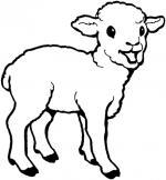 Sheep coloring