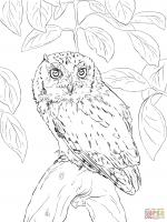 Short-eared Owl coloring