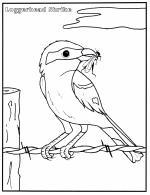 Shrike coloring